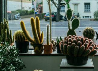 plant boutiques