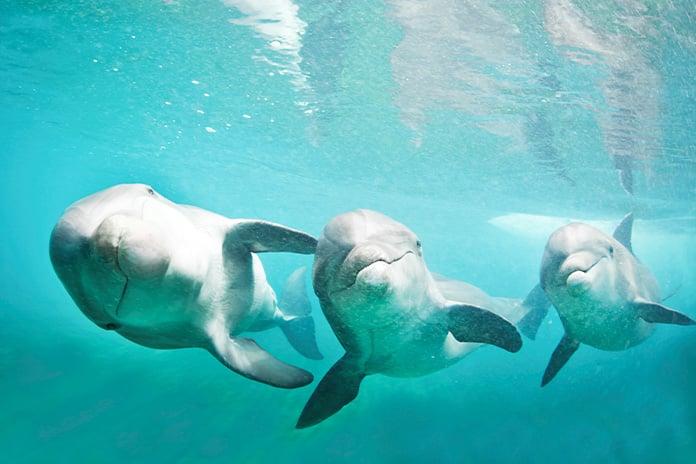 Dolphin Cay Atlantis Hotel Bahamas