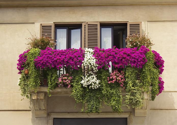 Petunias - best flowers for balconies