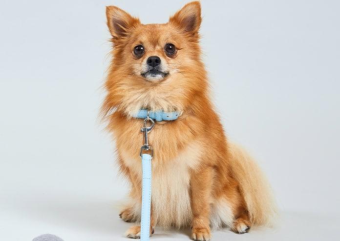 Bark Dog Lead Blue