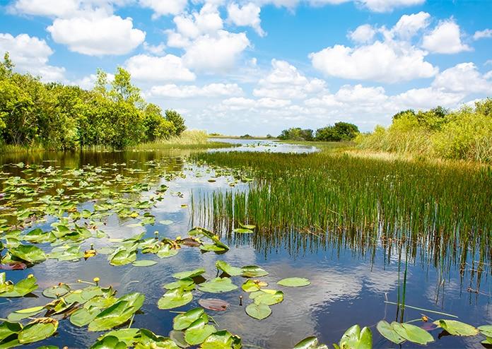 Everglades - best US states to visit