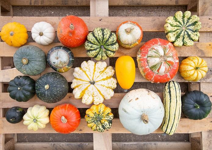 New Covent Garden Market Pumpkins