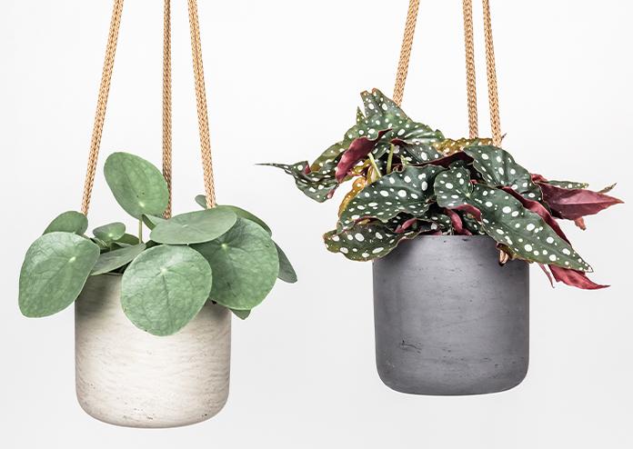 Home Updates Plants