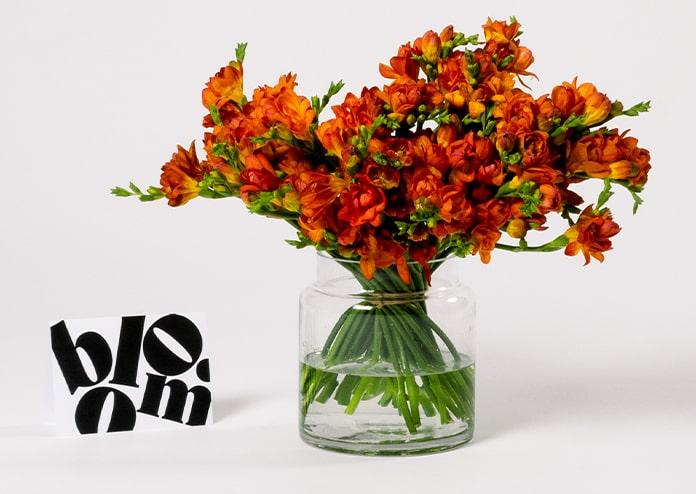 Bloom Order Flowers Online